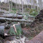 Flößersteig zwischen Neumann- und Felsenmühle