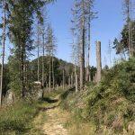 Oberer Hirschwaldweg