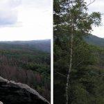 Fichtensterben im Schmilkaer Gebiet und weit hinein in die Böhmische Schweiz (als braune Flächen im Foto zu erkennen)