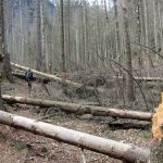 Bärenfangwändesteig