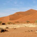 'Big Daddy' - eine der höchsten Sanddünen der Namib