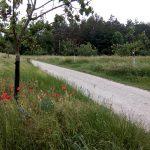 Obstgarten bei Bad Frankenhausen