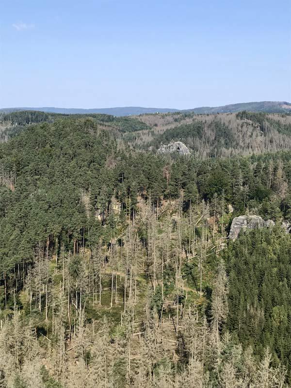 Blick vom Großen Pohlshorn