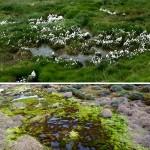 12-arktische-flora
