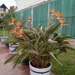 Rokoko-Orangerie Bendeleben