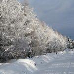 Winterwald am Kahleberg