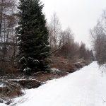 Sturmschäden auf dem Weg zum Kahleberg