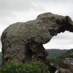 sardischer Elefant
